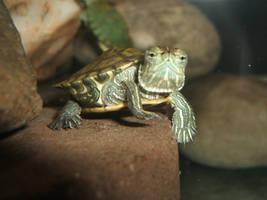 Turtle by Nimbus9