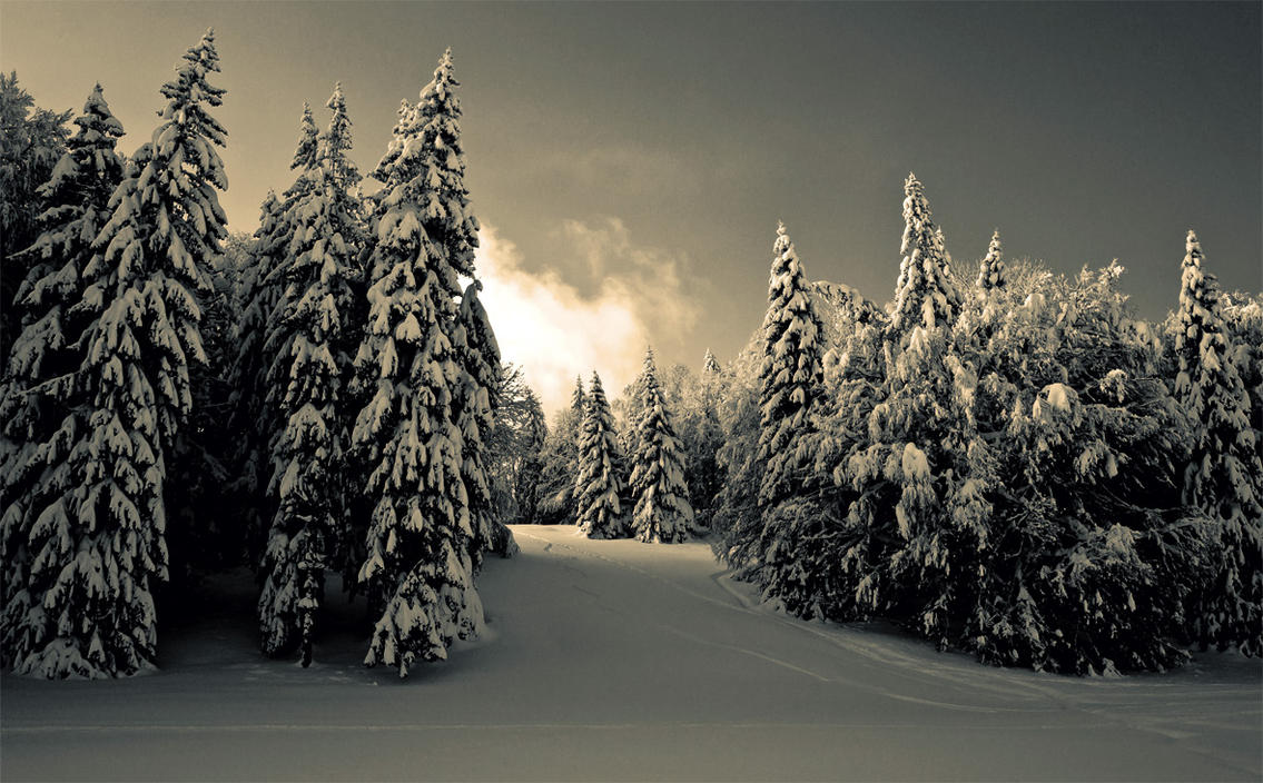 Winter's Walk by CelineSIMONI