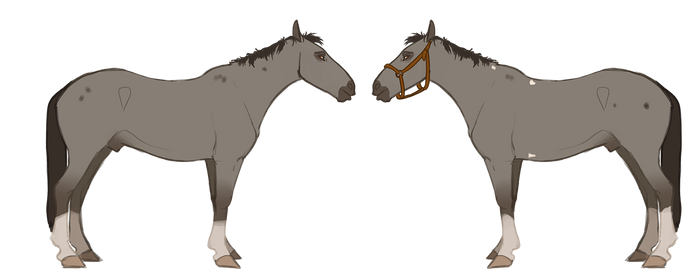 Horse adoptable auction