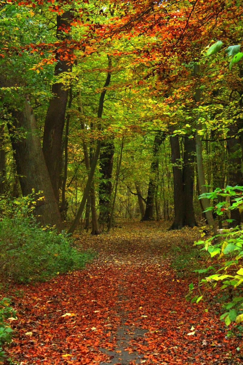Autumn 23 by Avahlon-Stock