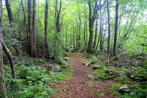 Swedish Woodland 7 by Avahlon-Stock