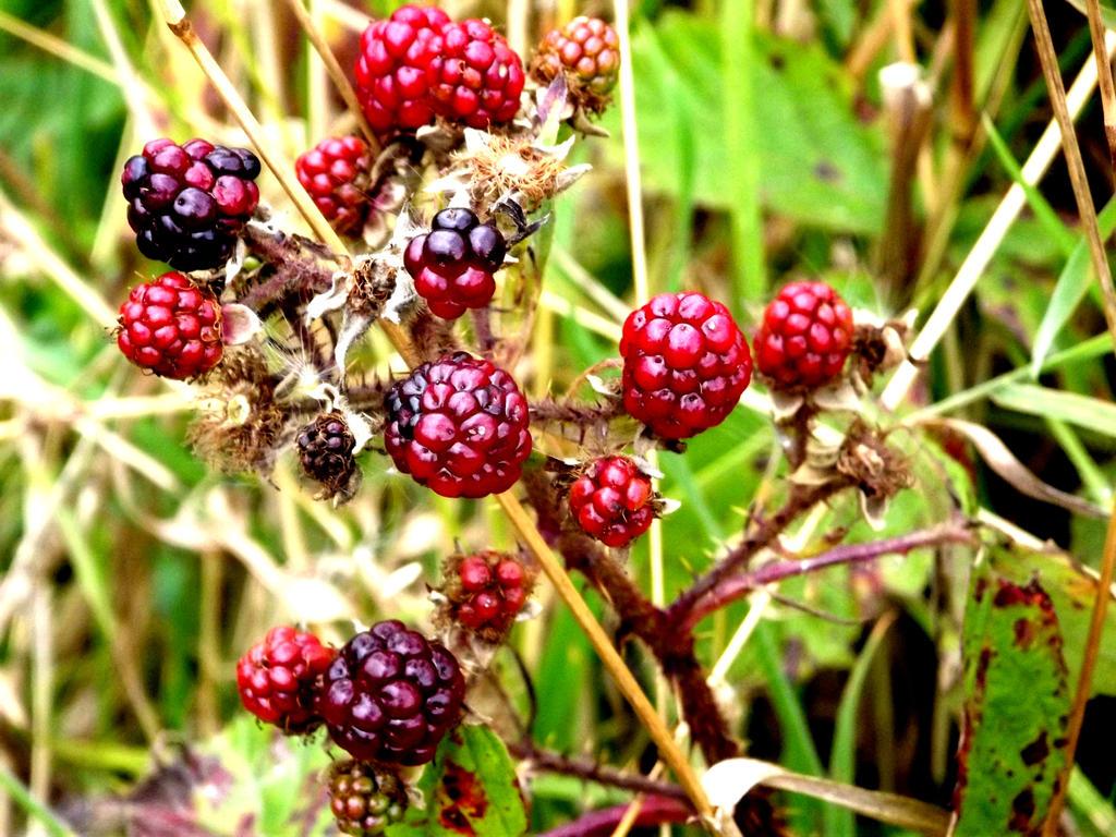 berries by ninjastar16