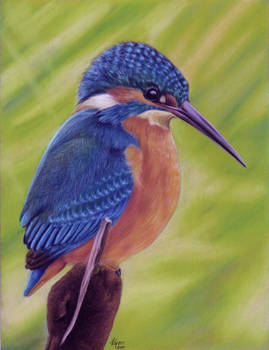 Kingfisher in pastels