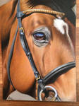 Horse close-up portrait