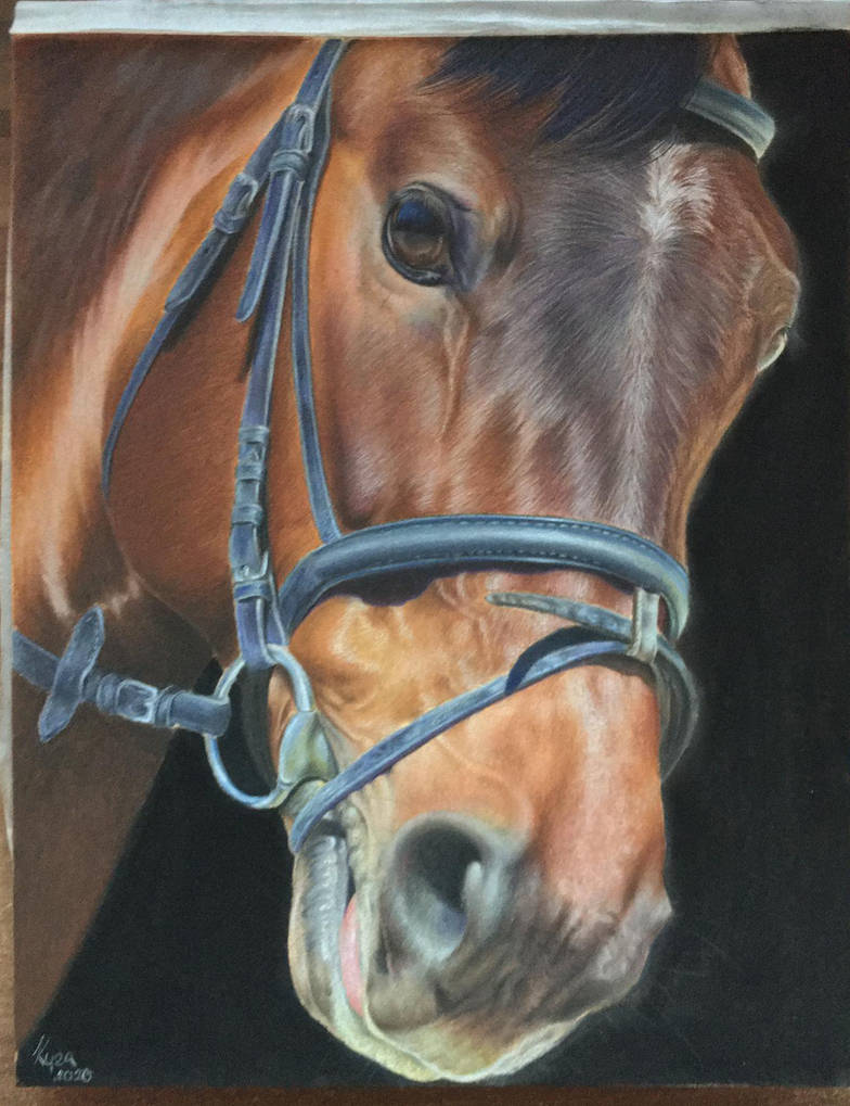 Horse close-up portrait No.2 by KyraArt-cz