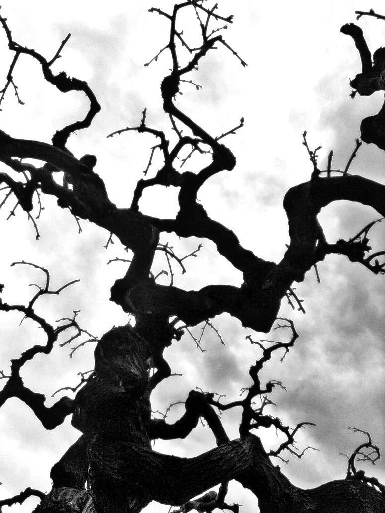Wicked Tree By Bluerayblacksoul On Deviantart