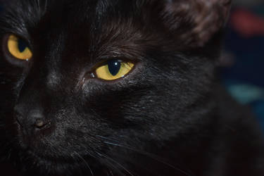 Cats eyes by suneaters