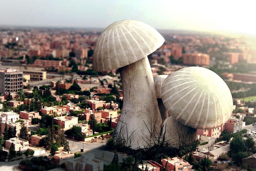 Giant Mushroom by Iskander1989