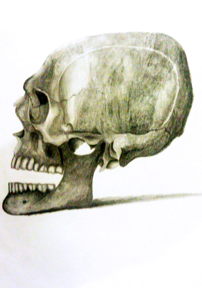 skull by beastwithapencil