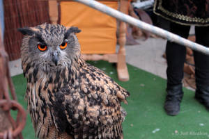 Owl by jkorakos