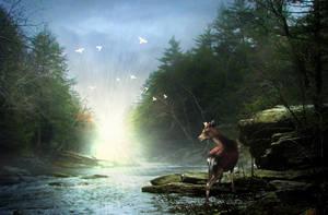 Forest Light by DarthIggy