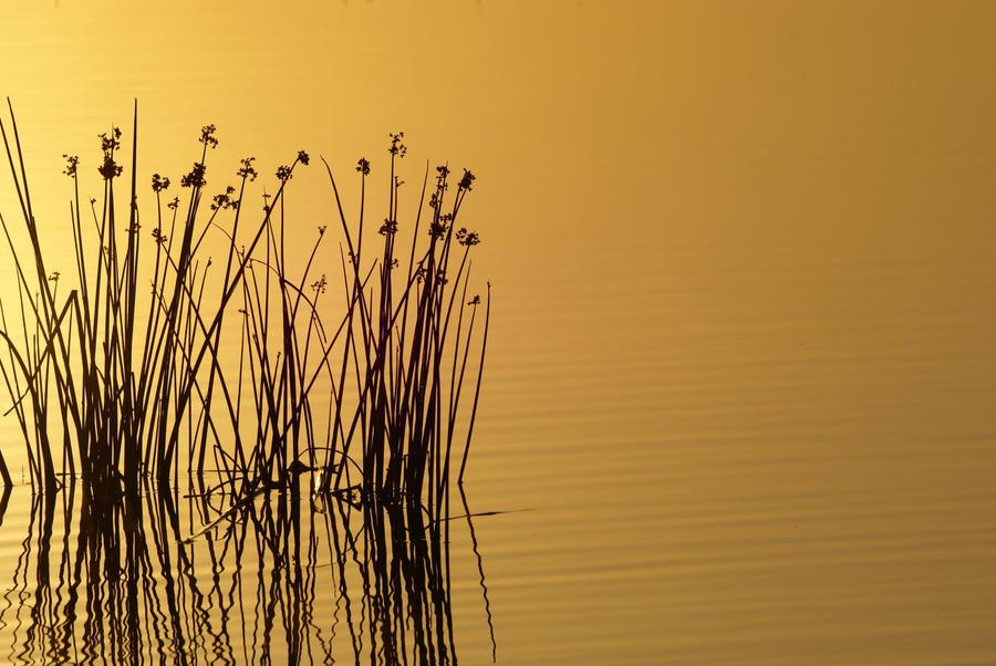 . . : Calm : . . by AdARDurden