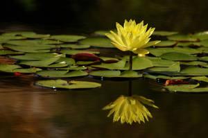 Summer Reflections by AdARDurden