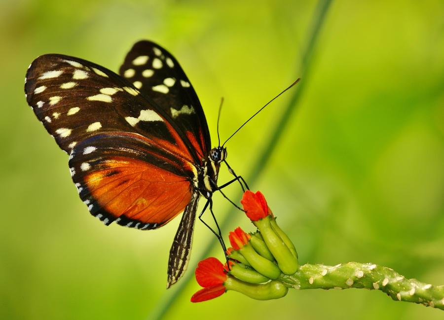 A Butterfly Dream by AdARDurden