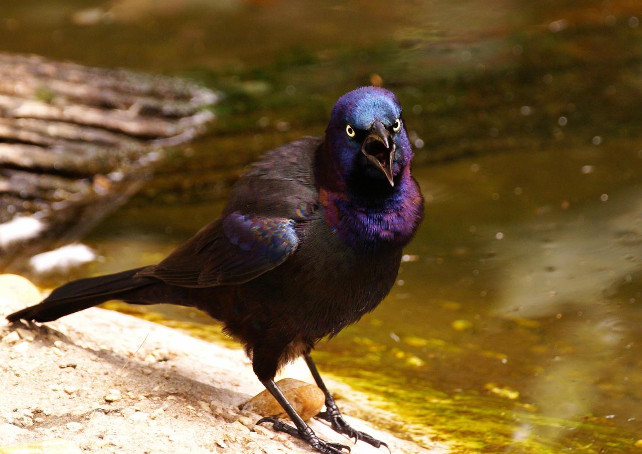 ..: Angry Bird :.. by AdARDurden