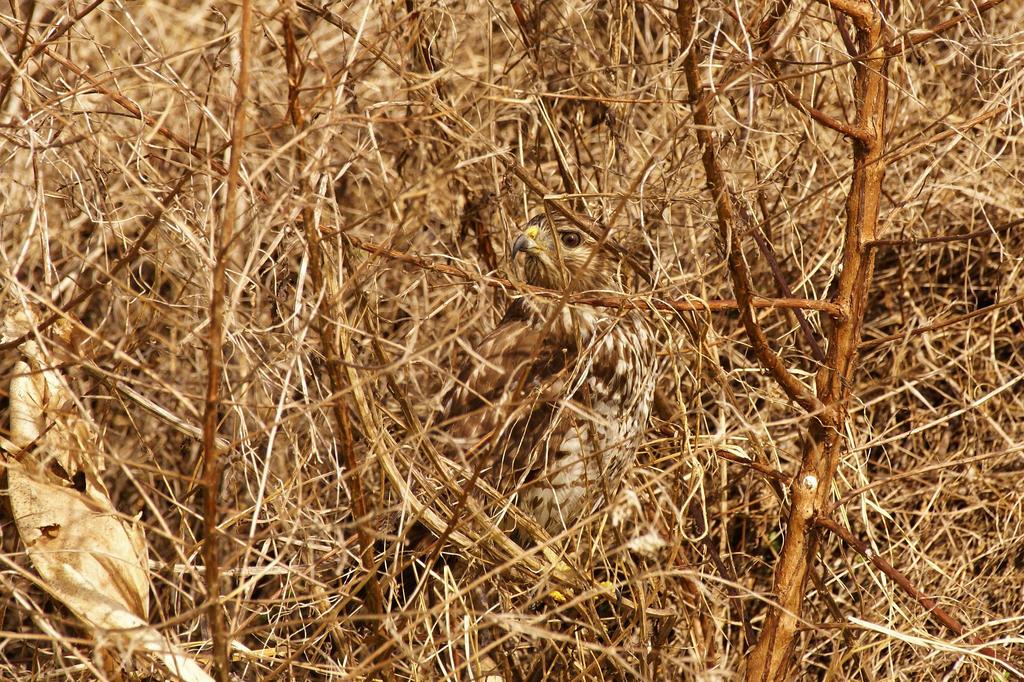 . .: The Best Camouflage Ever :. . by AdARDurden