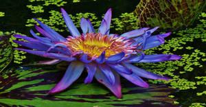 .:. . Floating Thru Life . .:. by AdARDurden