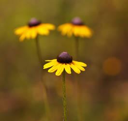 Summer Wildflowers in Florida
