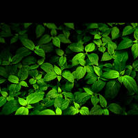 Green Nature by HenrirneH