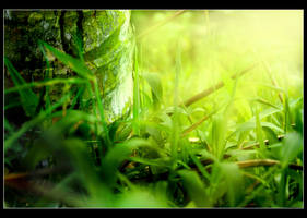 Leaves by HenrirneH