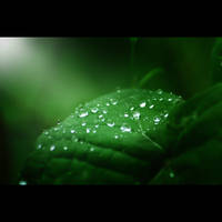 Drops reflects leaves by HenrirneH
