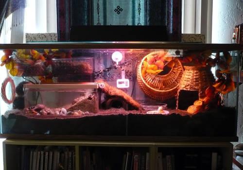 my herm tank