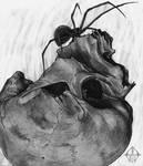 spider skull by GrathVonGraven