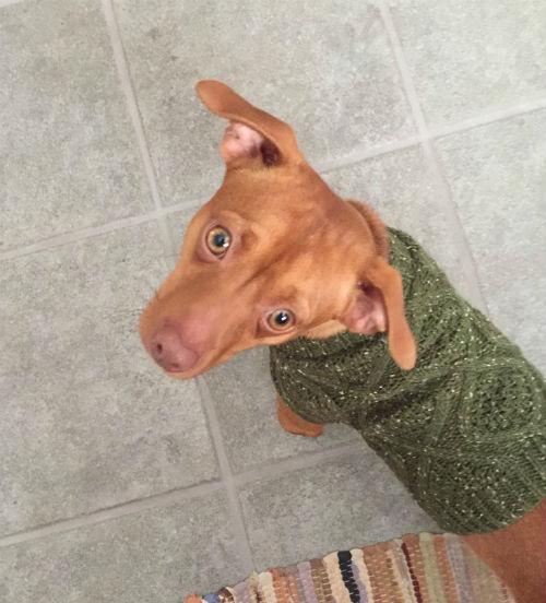 New Sweater! by wesleydog