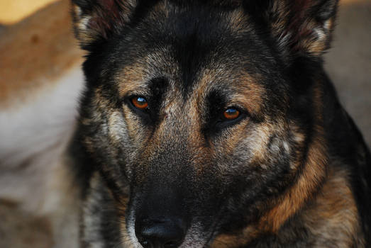 More Than a Dog