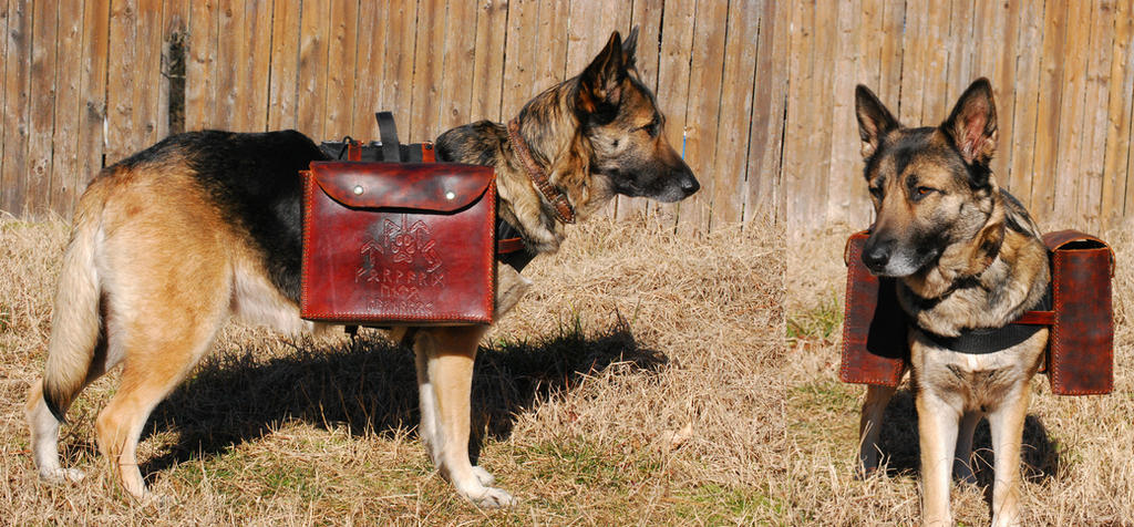 Pack Dog by Wolfegard