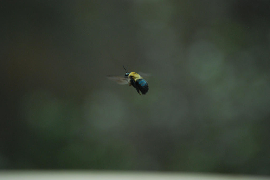 Bumble Bee by Wolfegard