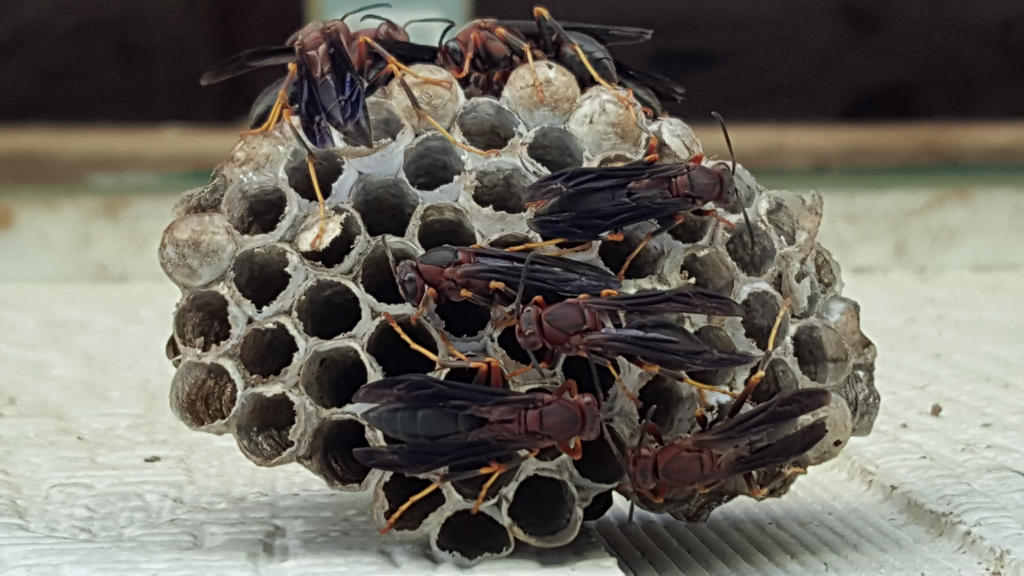 Wasps!  by Wolfegard