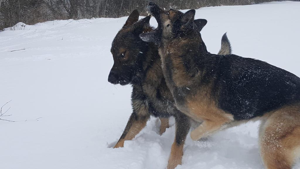 Snow Crazy by Wolfegard