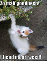 OHEHMGEE by MeowImakittycat