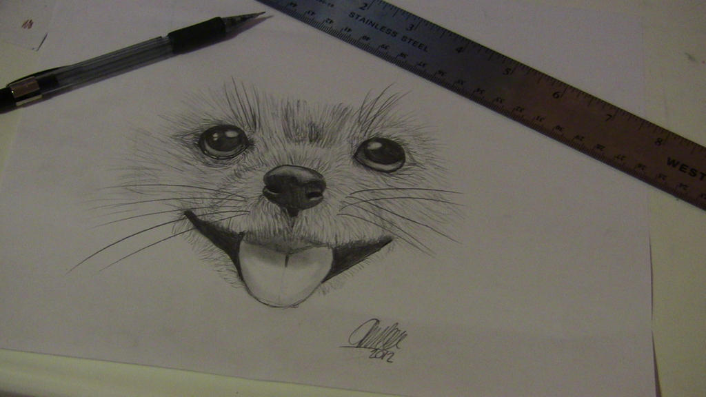 Easy realistic drawings of dogs - photo#2