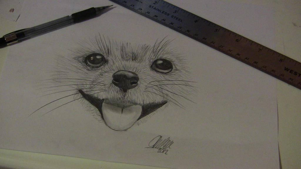 realistic dog drawing.... by MrsXerxesBreak on DeviantArt