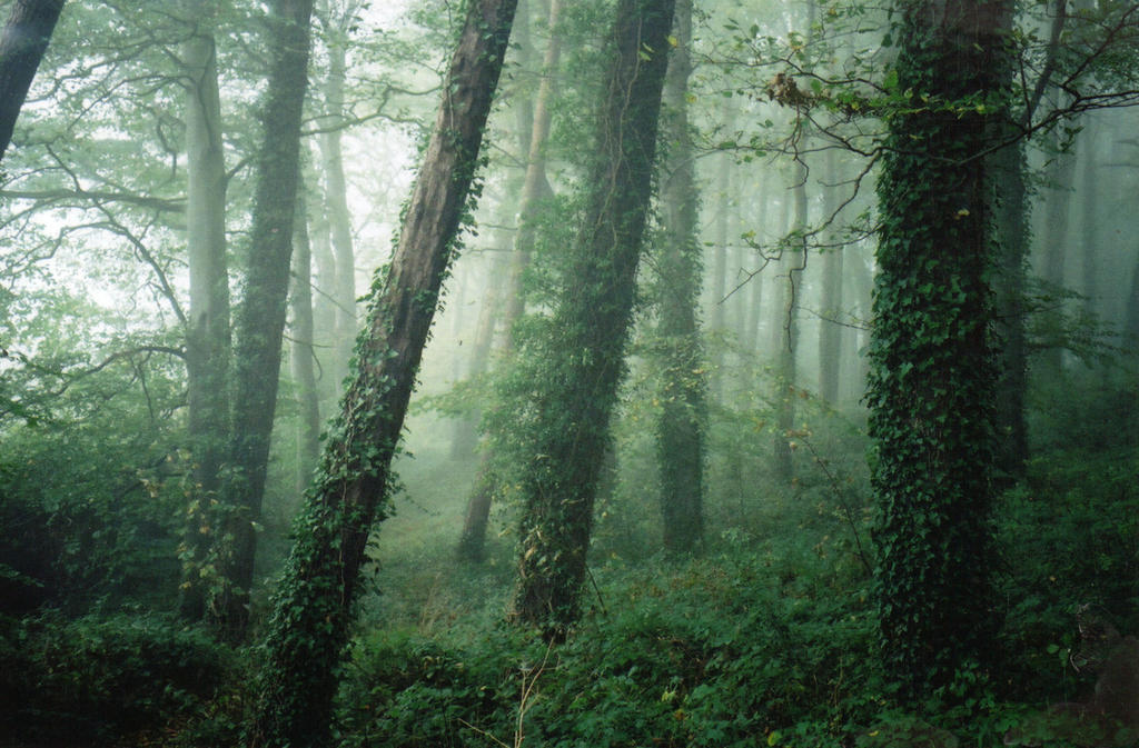 gilford wood in the fog by nightwing1975