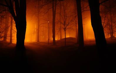foggy park by dzorma