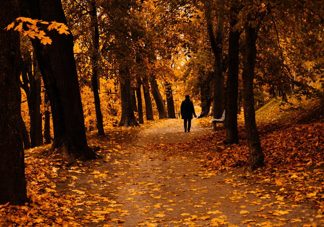 autumn by dzorma