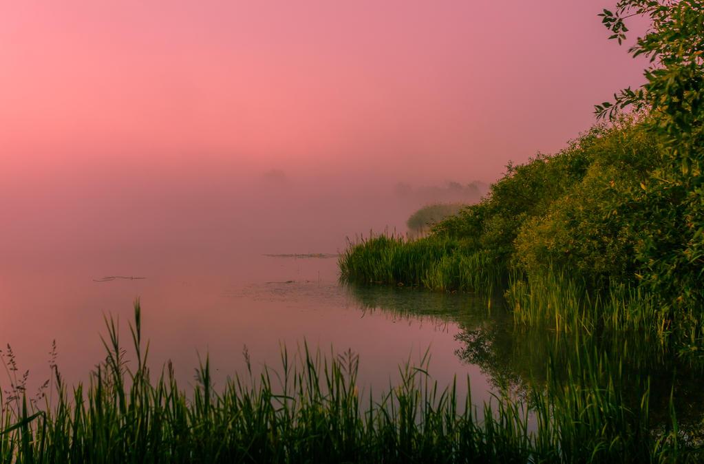 foggy sunrise by dzorma