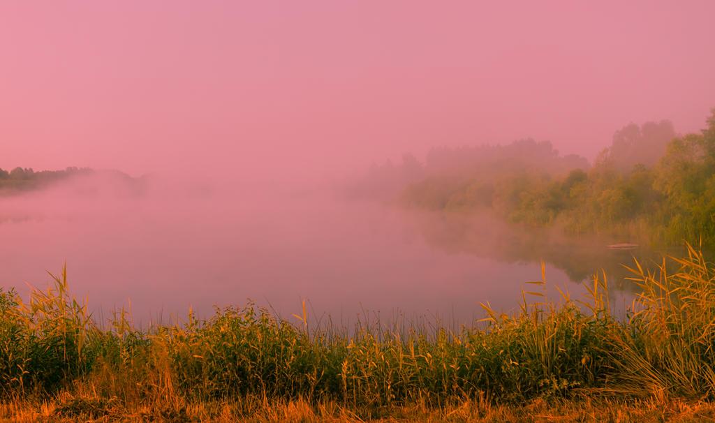 foggy morning by dzorma