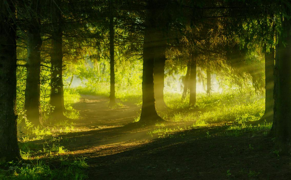 misty forest path by dzorma