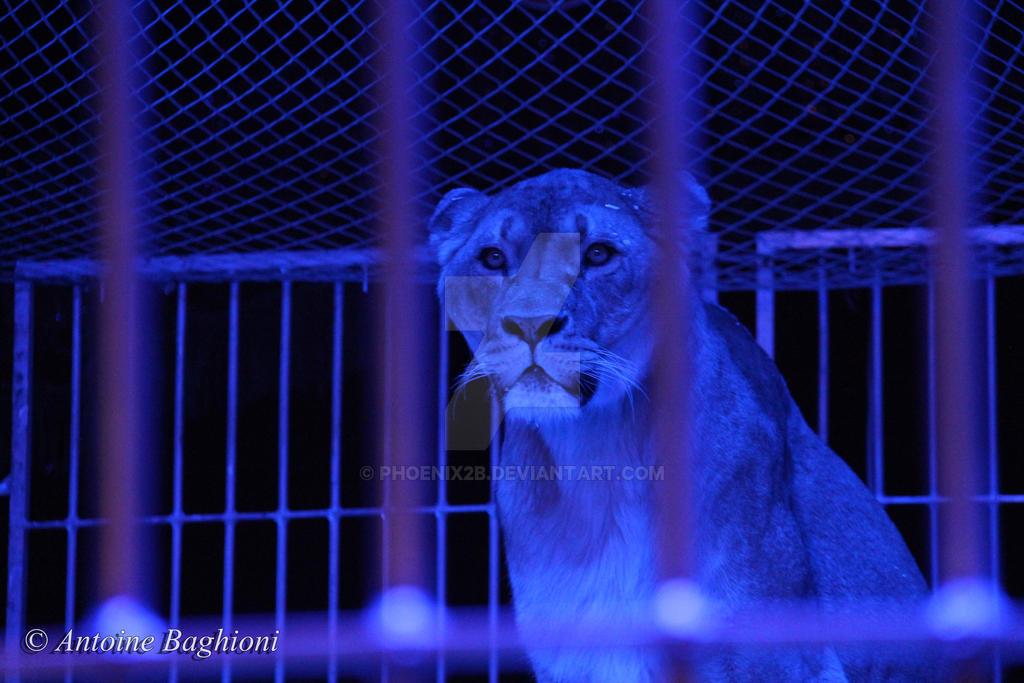 Circus by Phoenix2b