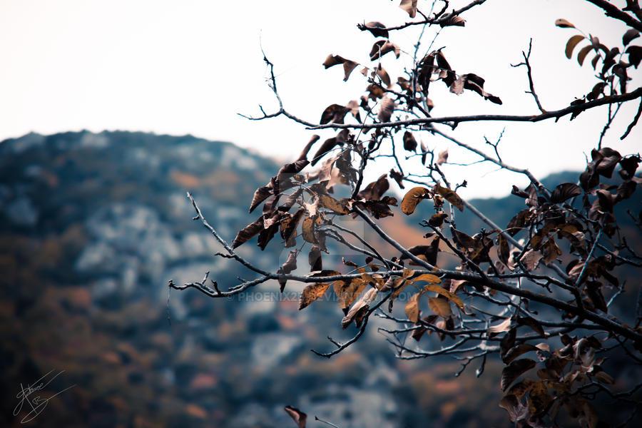 Corti Automne by Phoenix2b