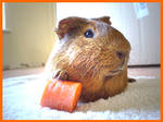 I'm to sexy for my carrot.