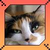 Kitty by darkgarden