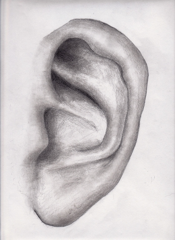 Human ear by dkim on DeviantArt