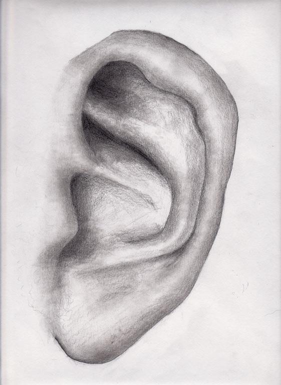 Human ear by dkim on DeviantArt