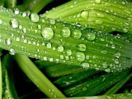 Rain Drops 2 by AgonizingSwordfish
