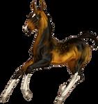 Zlesdin foal